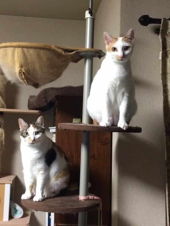 ミミちゃん♀&ララちゃん♀